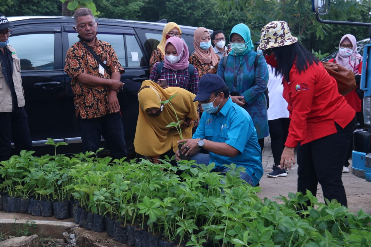 Porang Plant Cultivation, Therapy and Investment for Abandoned Residents