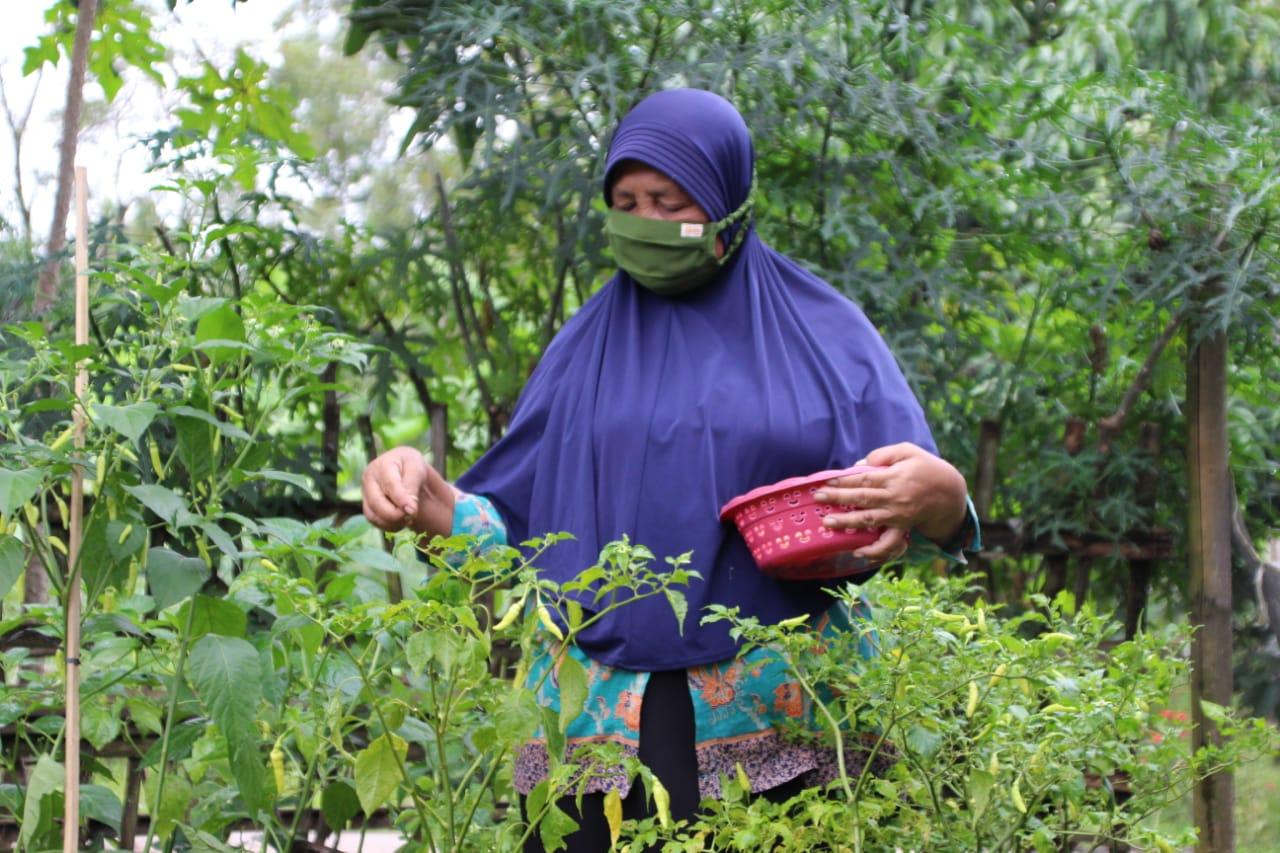 Elderly PKH Gardens Recreational Facilities Reduce the Risk of Dementia
