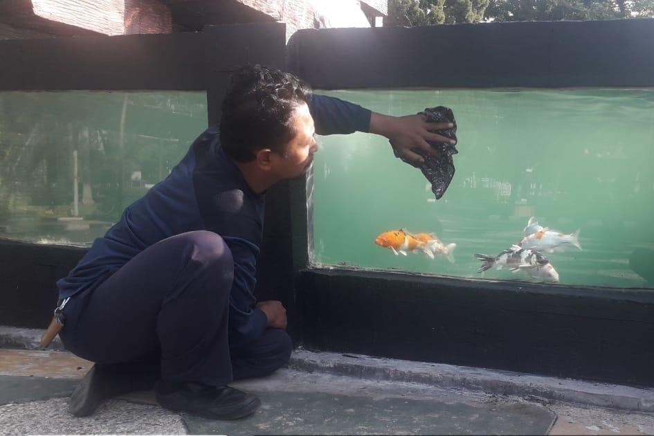 Inovasi Balai Wyata Guna Bandung Berdayakan Disabilitas dengan Pelatihan Budi Daya Ikan Koi